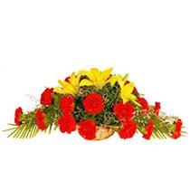 Carnation of Greetings